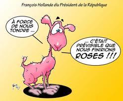 mouton-tondu